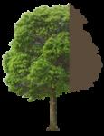 tree-75